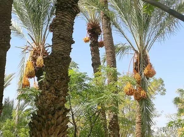 椰枣树下看一个穆斯林国家政治 — 伊斯兰与民主之一瞥