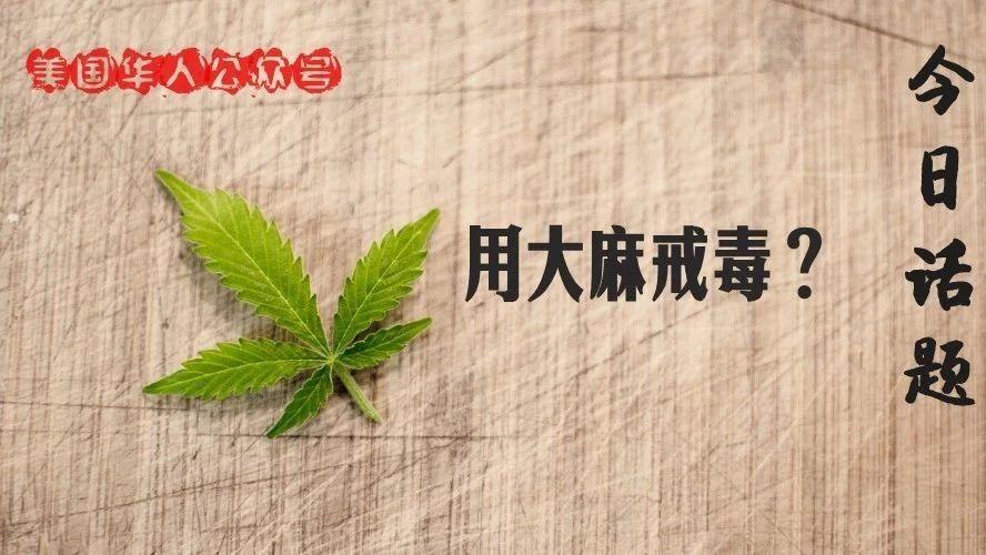 大麻!是美国鸦片危机的解药吗?