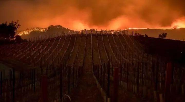 图姐 | 加州火火火,北加酒庄仙境陷火海,南加迪斯尼能见熊熊火光