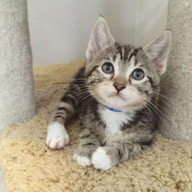 发人深省:猫咪和难民