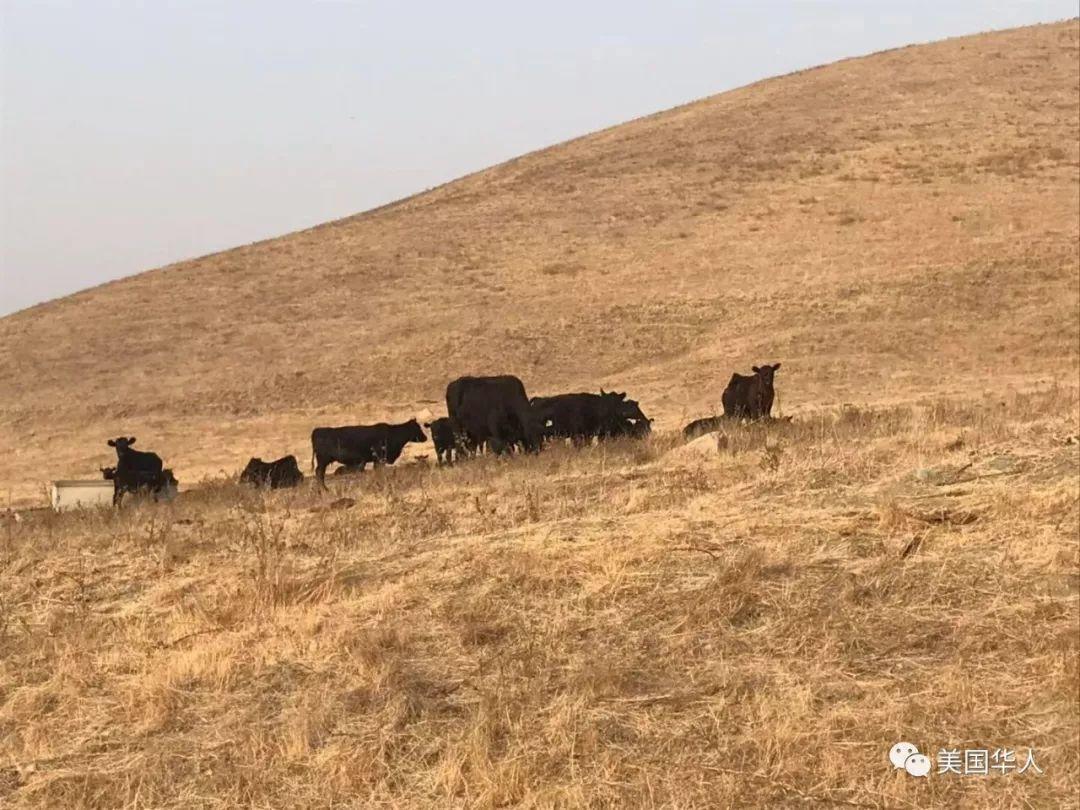 2019新年登高随想,那山,那草,那牛......