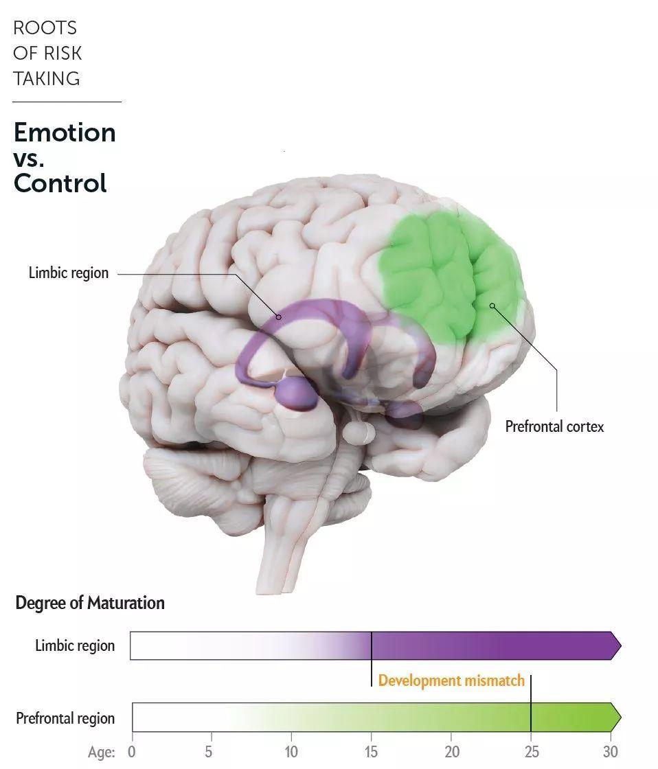 熟悉又陌生的孩子:浅谈青春期大脑发育